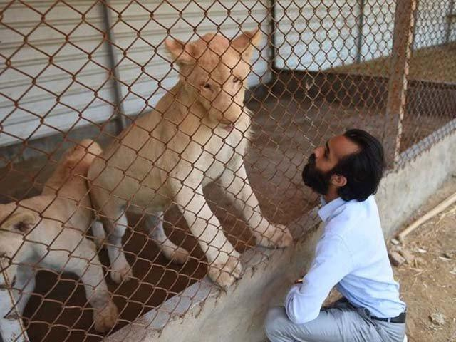 From the jungle to the cage: Pakistan's culture of keeping exotic animals as pets