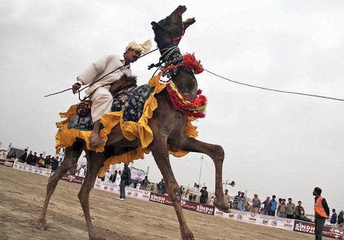 Sindh Horse Cattle Show 02