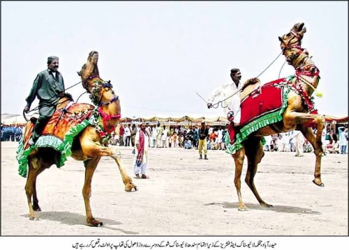 Sindh Horse Cattle Show 05